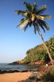 goa пляжа над валом ладони sunlit стоковые изображения