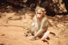 Goa d'Inde images libres de droits