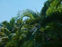 Goa del paesaggio Fotografia Stock