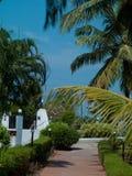 Goa del paesaggio Immagine Stock