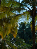 Goa del paisaje Foto de archivo
