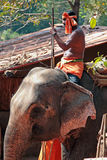 GOA, INDIA - FEB 19, 2008: Indian man riding an elephant Royalty Free Stock Photography