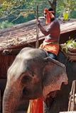 GOA INDIEN - FEBRUARI 19, 2008: Indisk man som rider en elefant Royaltyfri Fotografi