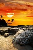 海滩表面goa shiva vagator 免版税库存照片