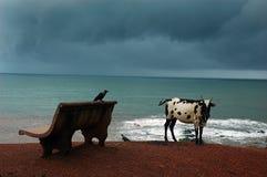 Goa Strände in Indien stockbilder