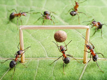 Goal, ants play soccer stock photography