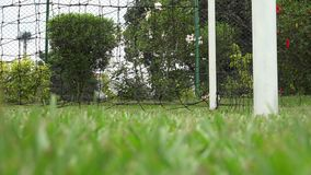Goal, Score, Points, Soccer, Futbol stock video footage
