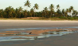 Goan view Royalty Free Stock Photography