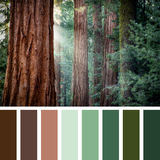 Goant redwood palette Royalty Free Stock Photo