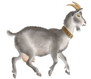 Goat. Grey goat with yellow horns Royalty Free Stock Photo