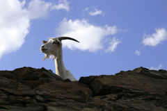 Goat Against The Sky Stock Photography