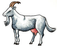 Goat animal Stock Image