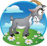 Goat on background royalty free stock images