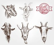 Goat breeding. Set of sketches made by hand vector illustration