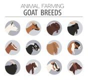 Goat breeds icon set. Animal farming. Flat design Stock Photography