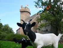 Goat and castle Stock Image