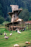 Goat Castle. Farm yard and goat's raised platform stock photos