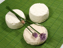 Goat cheese. On a green background Stock Photography