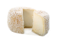 Goat cheese crottin de chavignol Stock Images