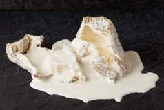 Goat cheese with mold Royalty Free Stock Images