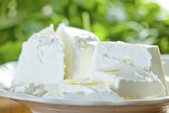 Goat Cheese Salad Royalty Free Stock Photos