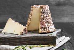 Goat cheese in shredded oak bark Stock Image