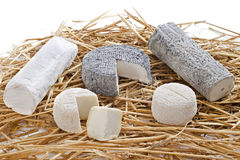 Goat cheeses Royalty Free Stock Image