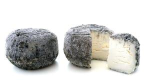 Goat cheeses stock photos