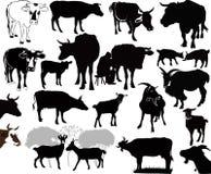Goat Cow animals calf isolated. White background stock illustration