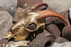 Goat cranium and gold color red Royalty Free Stock Images