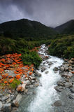 Goat Creek in the storm. Arthur's Pass National Park, New Zealand royalty free stock images