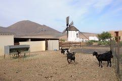Goat farm Stock Image