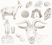 Goat farm. Goat, milk and cheese which produced from goats milk. Dairy farm set. Hand drawn country illustrations Royalty Free Stock Images