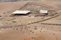 Goat farm in the mountains Royalty Free Stock Photo