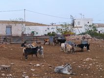 A goat farm in the village Tefia on Fuerteventuria Stock Photos