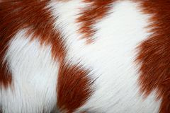 Goat fur background Royalty Free Stock Photo