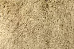 Goat Fur Background Royalty Free Stock Photos