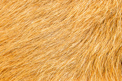 Goat fur closely Stock Photo