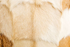 Goat fur closely Stock Photography