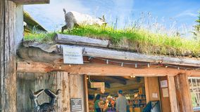 Goat grazing on roof of grass in Coombs Nanaimo Canada. Goat grazing on roof of grass on top of a shop in Coombs Nanaimo Canada Stock Photo