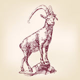 Goat hand drawn vector llustration Royalty Free Stock Photography