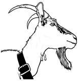 Goat Head Royalty Free Stock Photo
