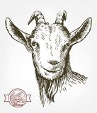 Goat head. livestock. animal grazing. sketch drawn by hand. Royalty Free Stock Image