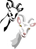 Goat. Head of white goat - color and black illustrations Stock Images