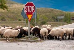 Goat herd Royalty Free Stock Image