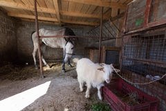 Goat and horse Stock Photo