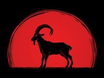 Goat Ibex Royalty Free Stock Photos