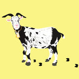 A goat Stock Images