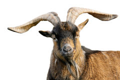 Goat with impressive horns isolated on white Stock Photo