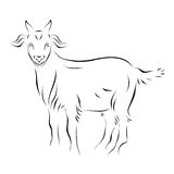 Goat Ink Line Art Royalty Free Stock Images